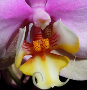 Orchids Photo Gallery